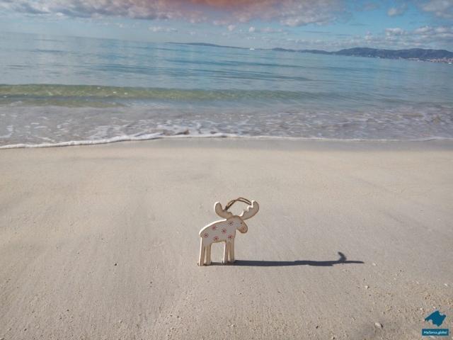 Elch am Strand