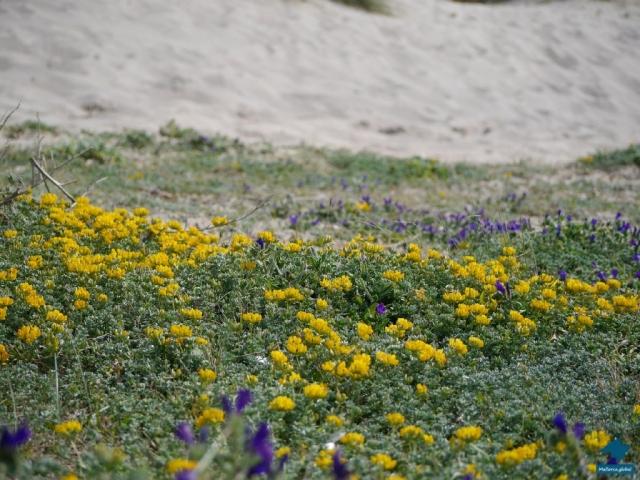 Mallorca Dünen